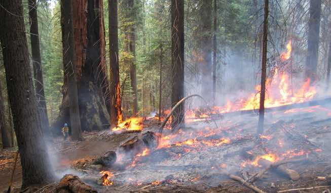 Wildfire Prevents Wildfire - Don't Let Your Investments Burn