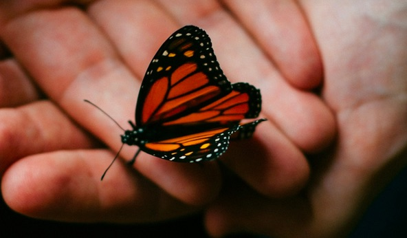 Why Our Economy Should Be Like A Butterfly