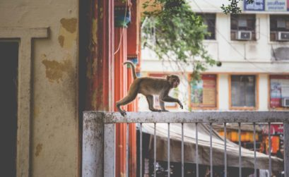 monkey invest