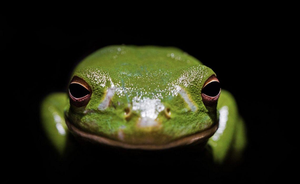 marijuana boiling frog